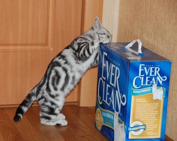Что нужно купить для  котенка?