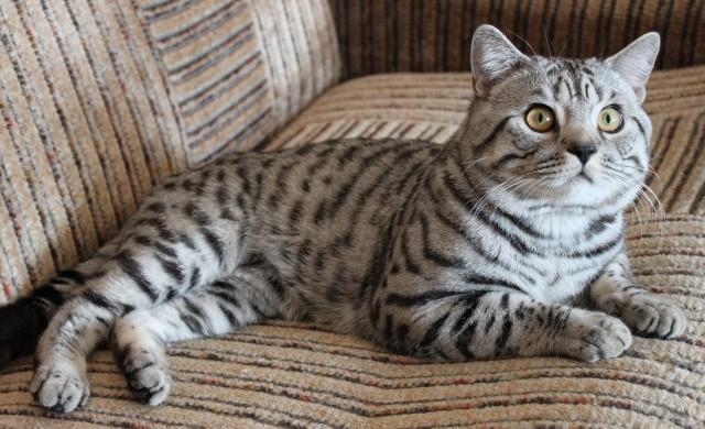 Адаптация кота в новом доме