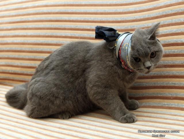 Если у кошки выпадают зубы и как выпадают зубы у котенка