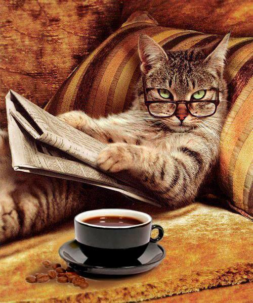 как правильно познакомить кошек чтобы они дружили