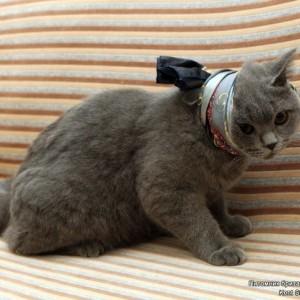 Зубы у кошки. Болят ли зубы у кошки?