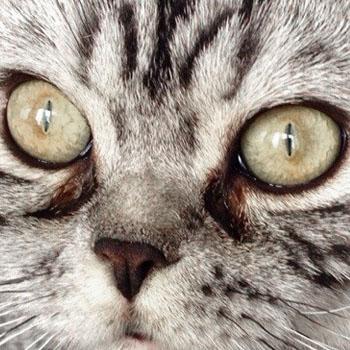 глазные капли при аллергии глаз кромогексал цена