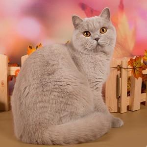 "Выставка кошек ""Кэт-Салон-Сентябрь""  2017"
