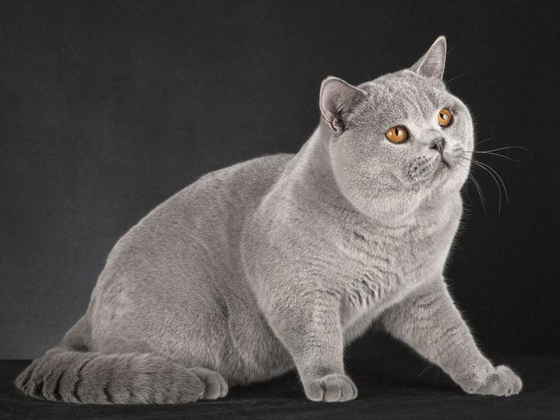 папа кот