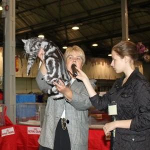 Международная выставка кошек Осенний Кэт-Салон