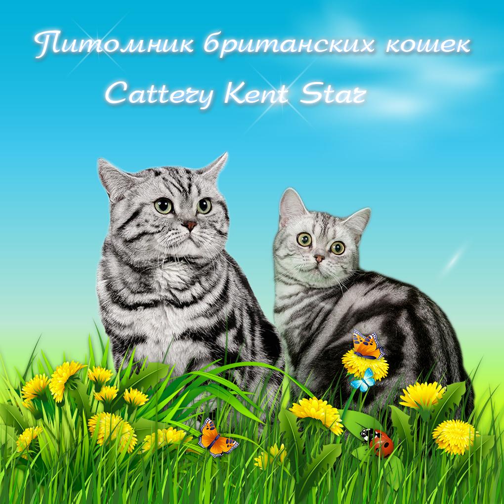 чем кормить кота при аллергии