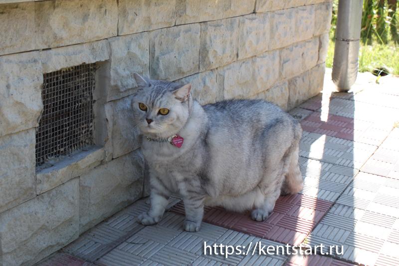кошка на даче