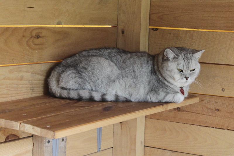 кошка Беатрис