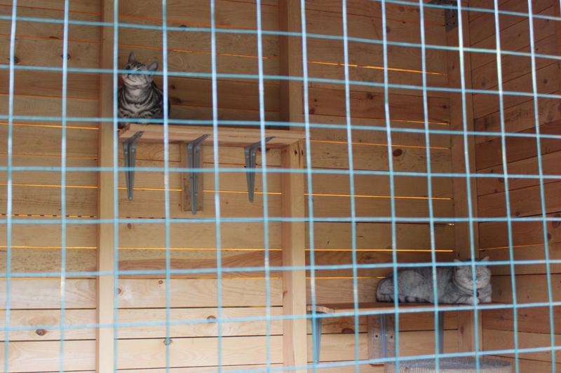 кошки в вольере