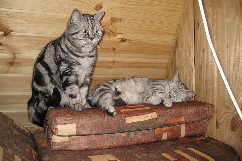 кошки на даче