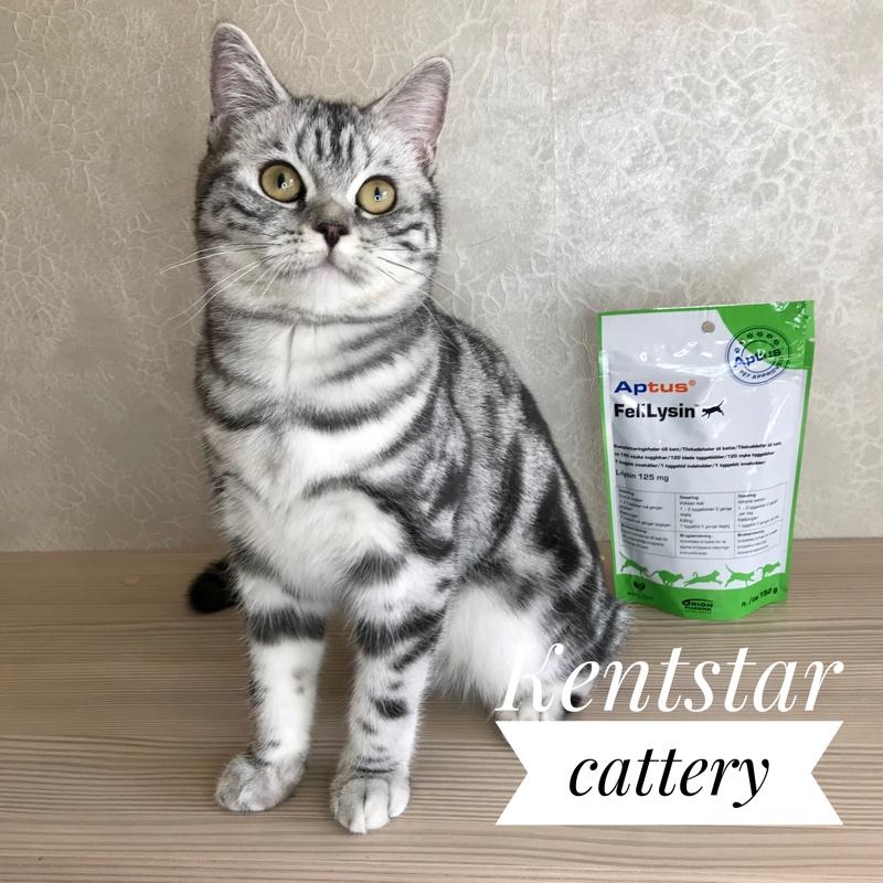 Лизин для кошек