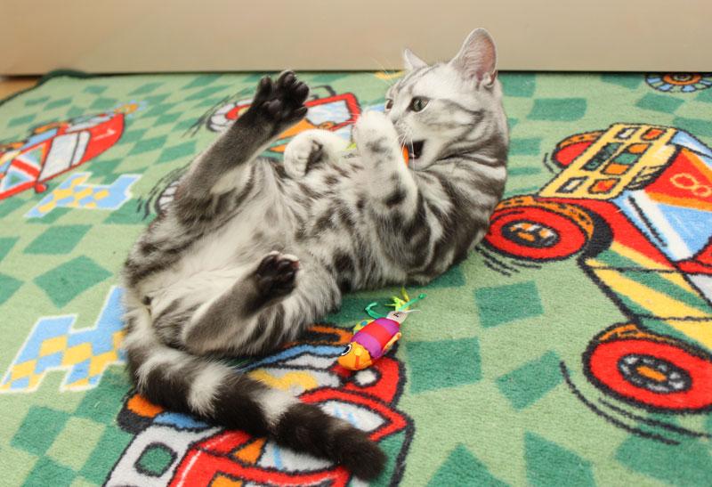 игрушка рыбка для кошек