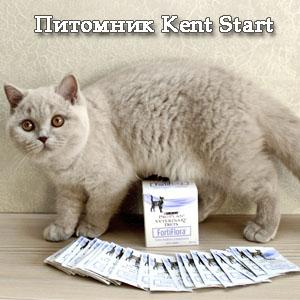 Пищевая добавка фортифлора для кошек Преимущества фортифлоры для кошек