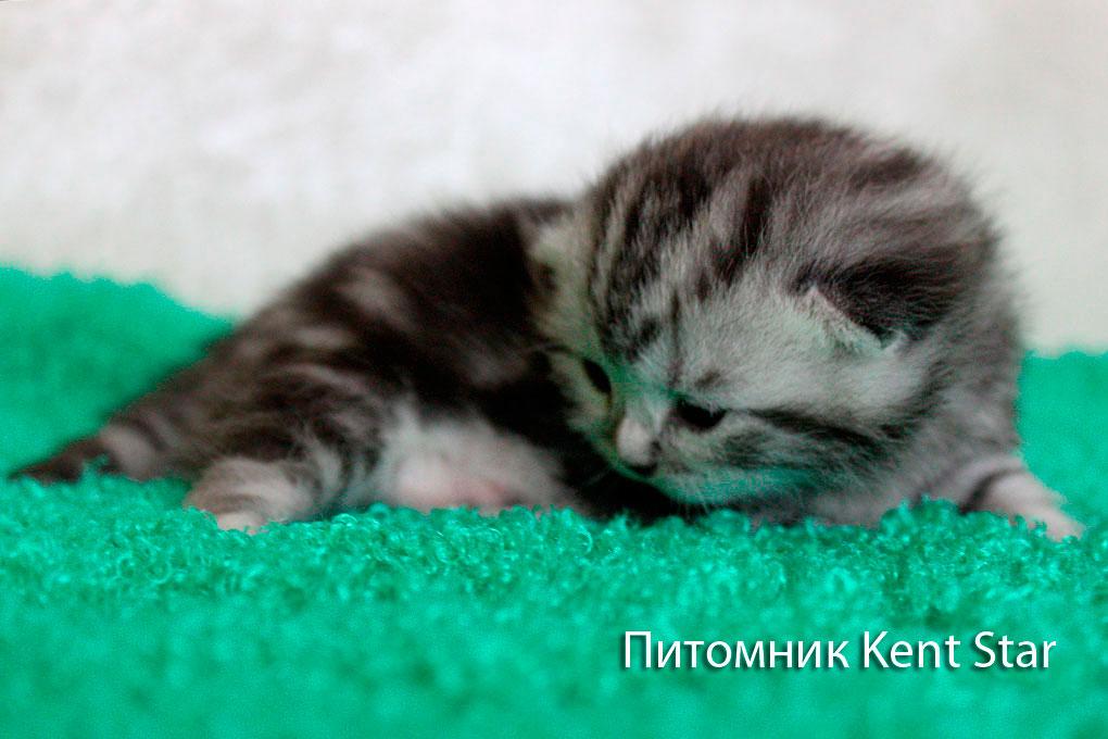 котята 12 дней
