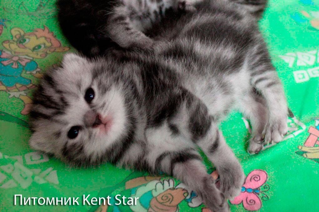 котятам 12 дней