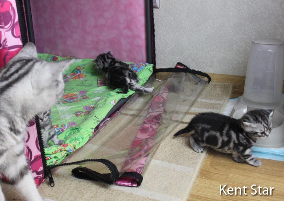 котятам 18 дней