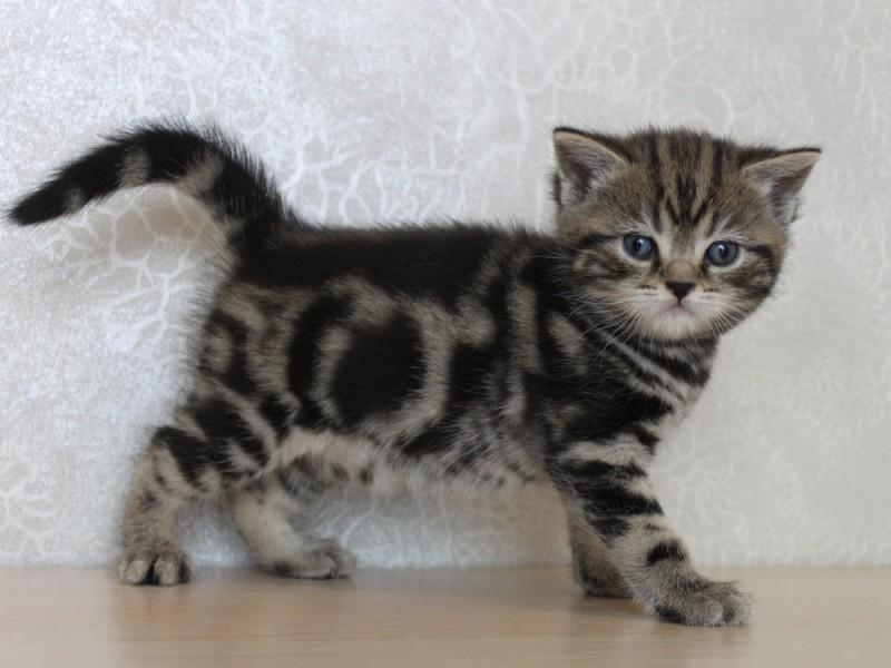 фото котенка в 1 месяц