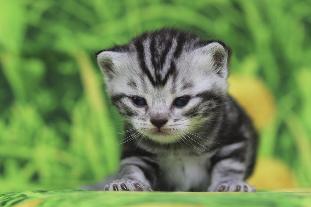 фото маши кошки
