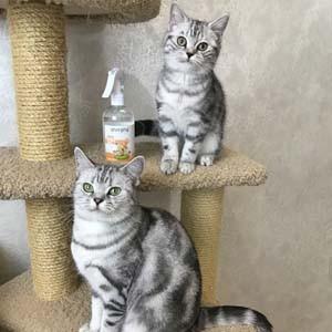 Запах кошачьего туалета