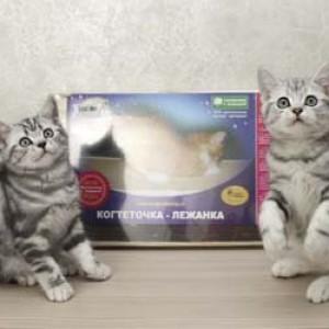 Недорогая когтеточка  для кошек