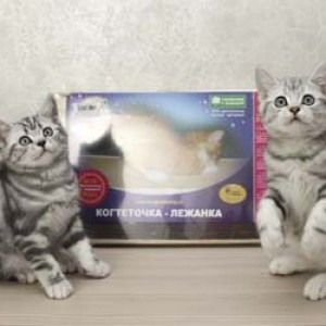 Когтедралка домашняя для кошек