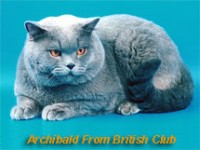archibald_from_british_club.jpg