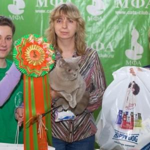 Выставка кошек. Система МФА