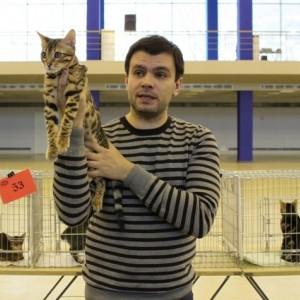 Выставка кошек. Система CFA