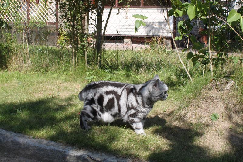 кот гуляет на даче