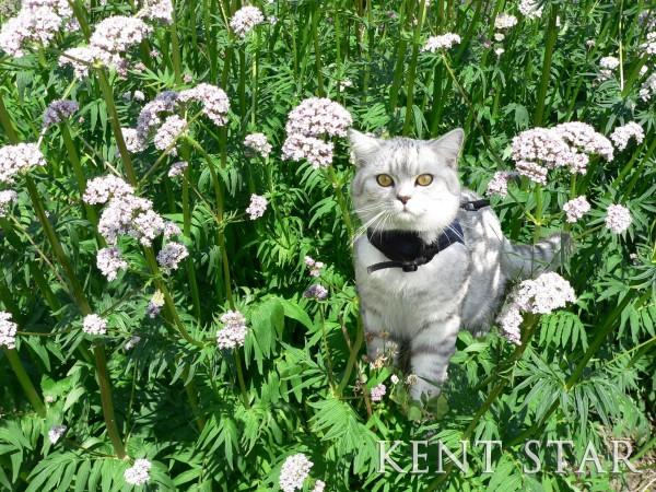 Средства для кошек контрасекс кмс