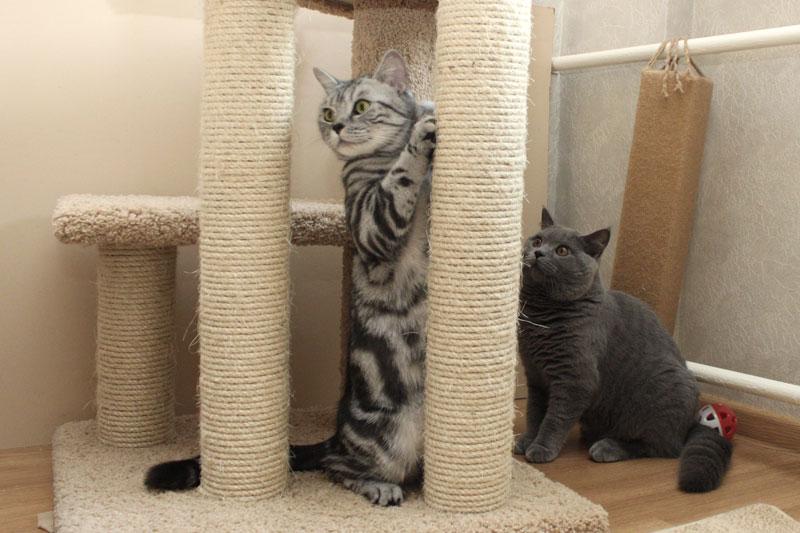 Что будет, если дать кошке валерьянку