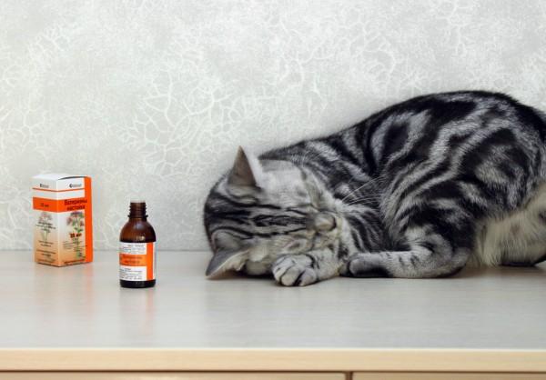 Контрасекс для котов что туда входит