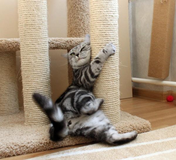 Можно ли коту дать валериану в таблетках